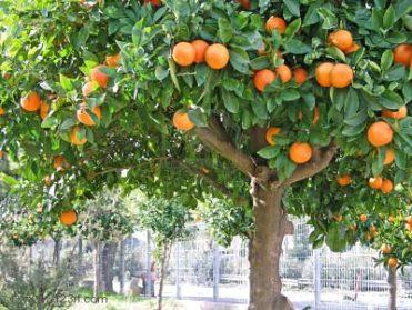 La Ciudad del Perfume de naranjo en flor