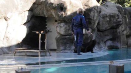 Polémica en el zoo: fallecieron dos lobos marinos y sospechan que fue por someterlos a espectáculos