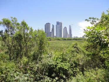La Reserva Ecológica de la Costanera Sur cumple 30 años