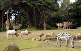 Chau Zoológico, Hola Ecoparque