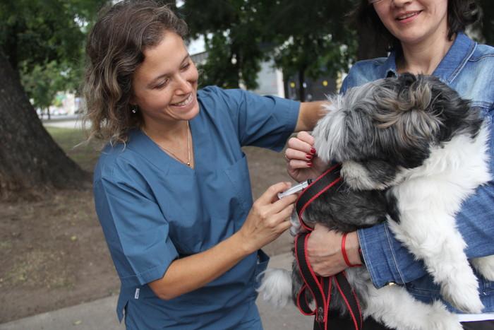 La campaña de vacunación antirrábica para perros y gatos llega a la Comuna 10