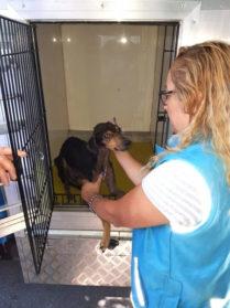 Villa Luro: Rescatan animales domésticos que vivían en malas condiciones
