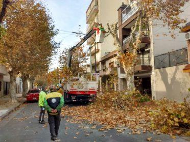 "Comuna 10: aprueban poda de 30 árboles que presentan ""potencial riesgo de caída"""