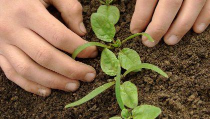 Qué cultivar en mayo | Huerterxs Villa Luro y una apuesta por la espinaca