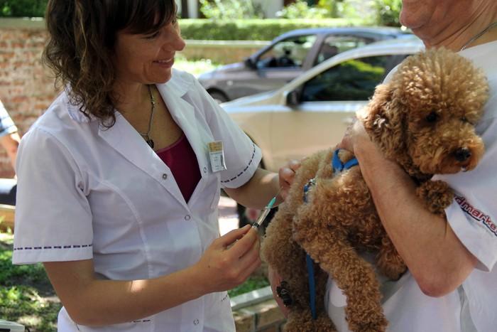 Preocupación por la suspensión de turnos para castraciones y atención veterinaria en el Instituto Pasteur