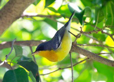 Plaza Terán, un lugar privilegiado para la observación de aves en pleno Villa Real