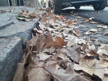 La Comuna 10, tapada de hojas | Lo que trajo el otoño y la pandemia
