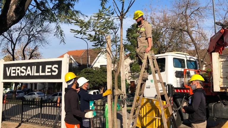 Volvieron a plantar dos árboles de tipas en el Paseo Versalles